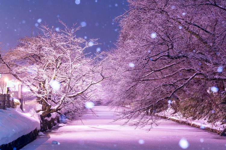 弘前公園的冬季燈光秀