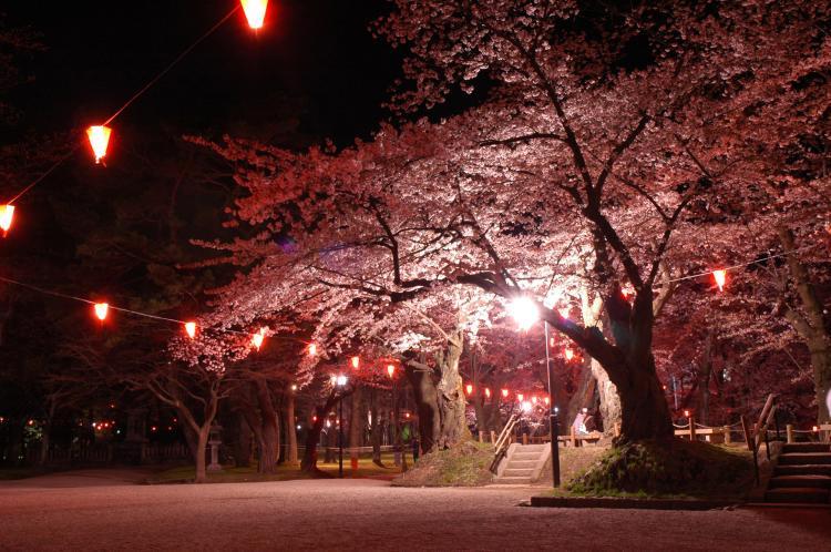 千秋公園櫻花祭