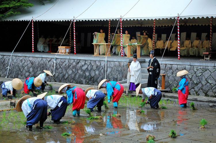 田植祭(伏見稻荷)