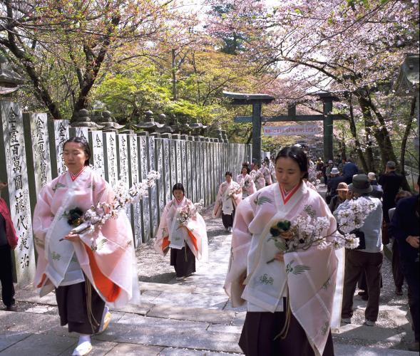 櫻花祭(金刀比羅宮)