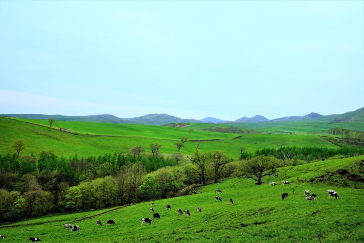 Naitai高原牧場