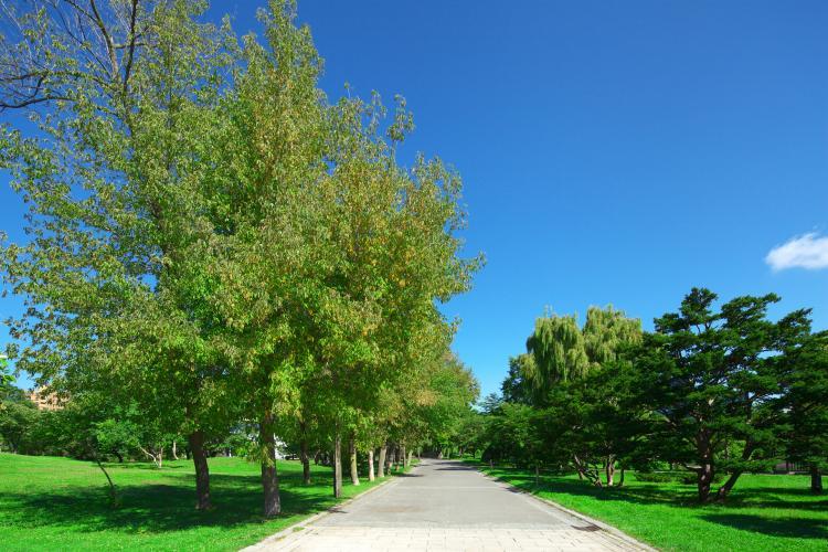 中島公園(豐平館)