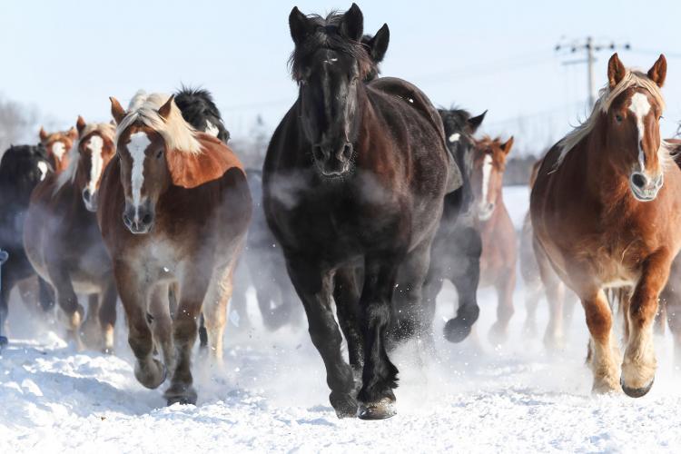 北國馬牧場