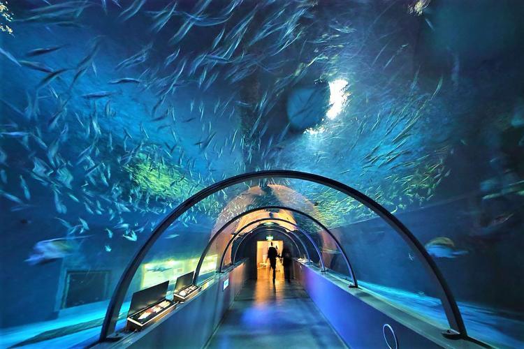 登別尼克斯海洋公園地(登別水族館)