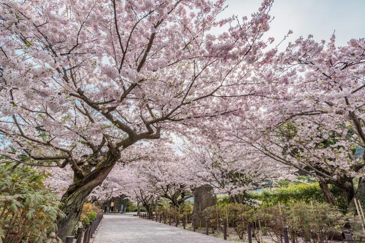 【函館】住三吉神社