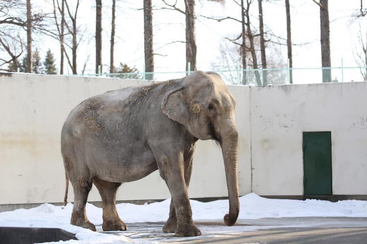 帶廣動物園