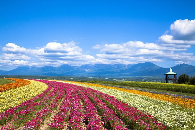 Flower Land上富良野