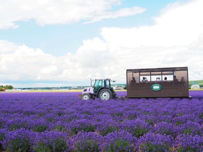 富田農場 Lavender East