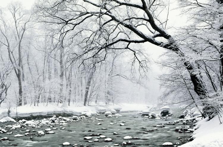 奥入瀬溪流