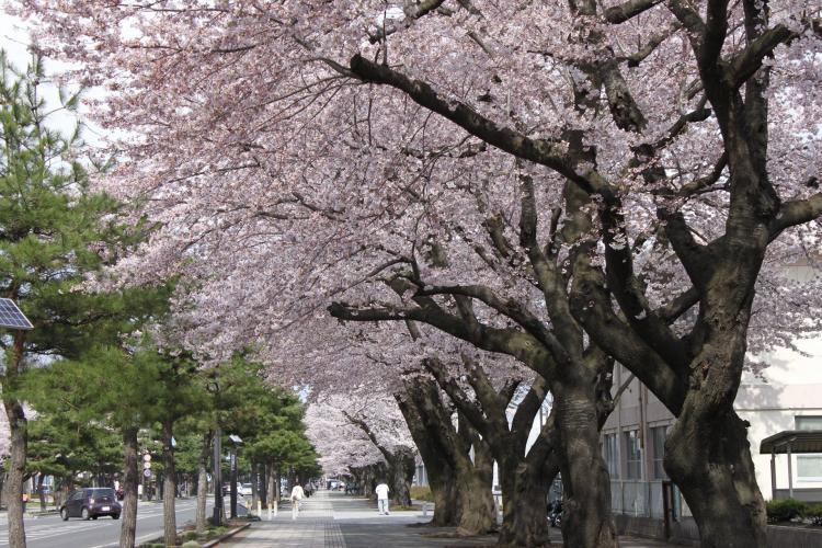 十和田市官廳街通
