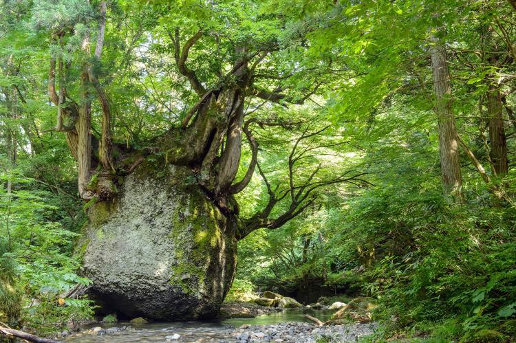 Nekobari岩石