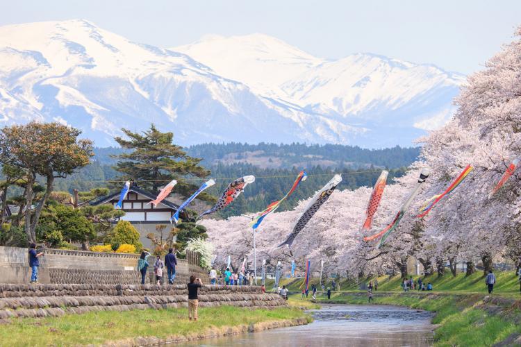 洗澤川的櫻花道