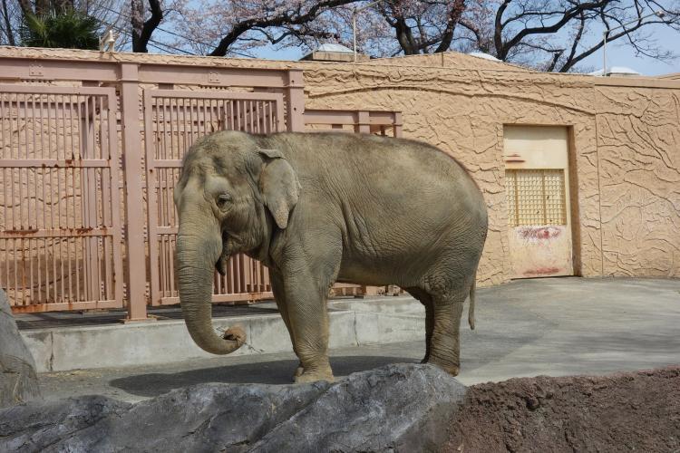 日立市神峰動物園