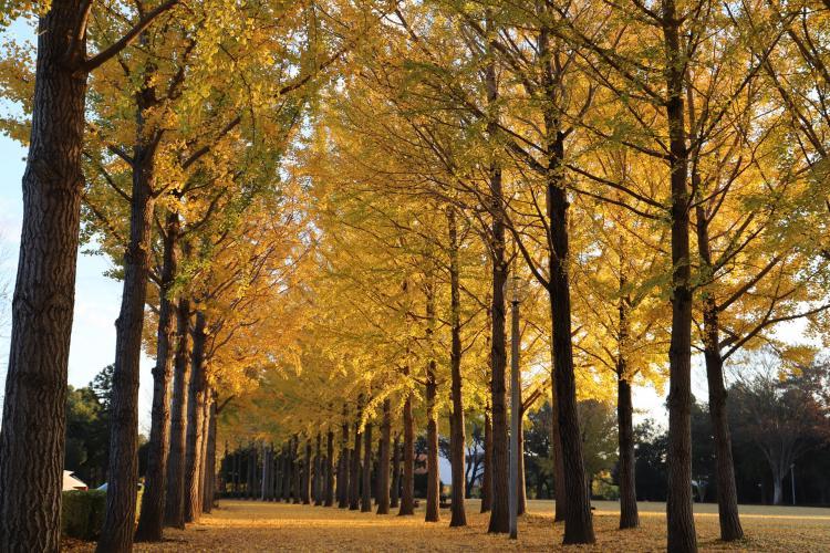 科學萬博記念公園