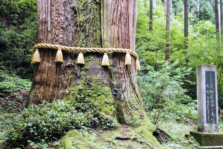 御岩山的三本杉(御岩山神社)