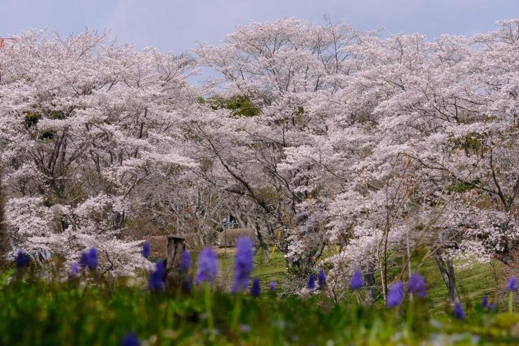 靜峰故鄉公園