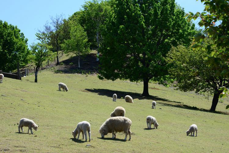 伊香保綠色牧場