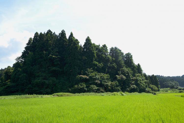 龍貓之森(狹山丘陵)