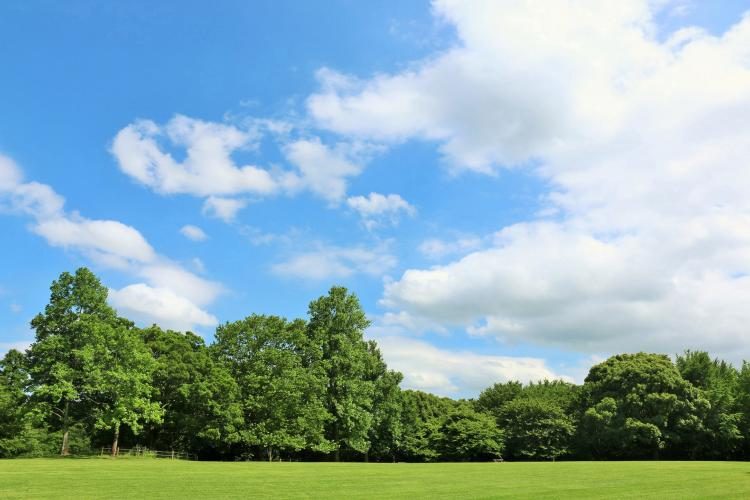 青葉之森公園