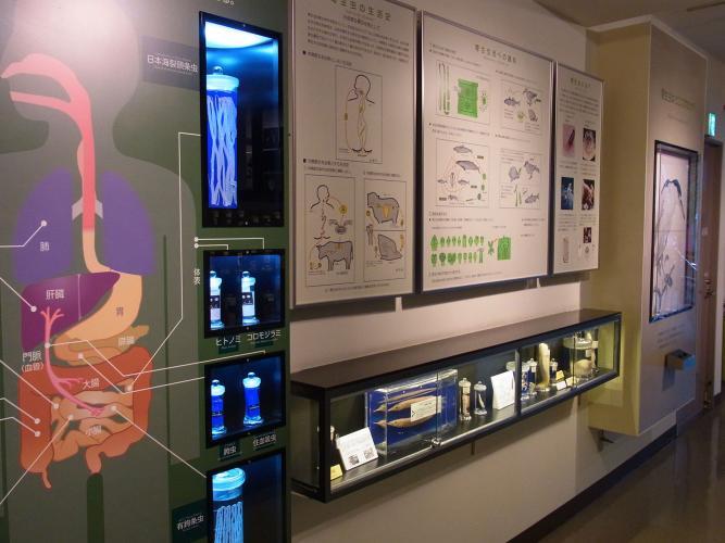 目黒寄生蟲博物館