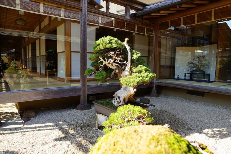 春花園BONSAI美術館