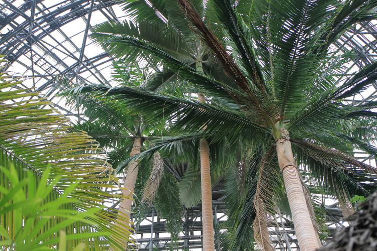 熱帶環境植物館