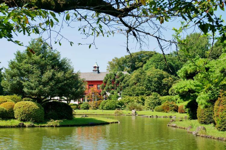東京大學大學院理學系研究科附屬植物園(小石川植物園)