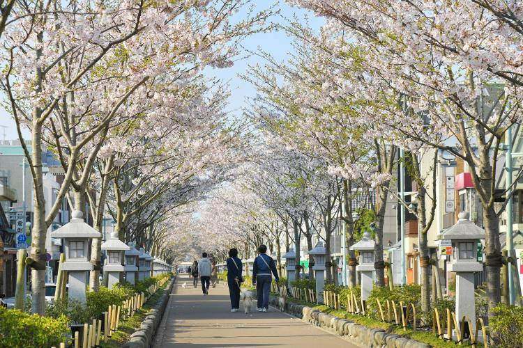 鶴岡八幡宮(鎌倉)
