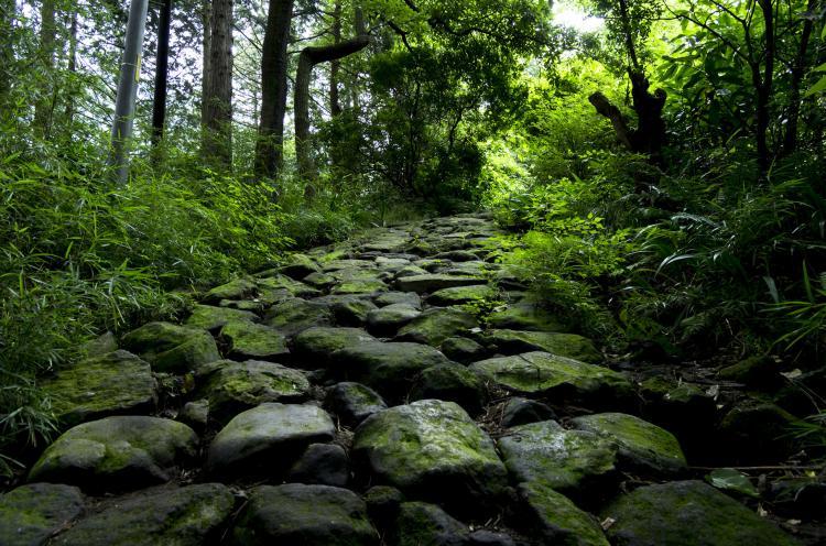 箱根舊東海道石板道