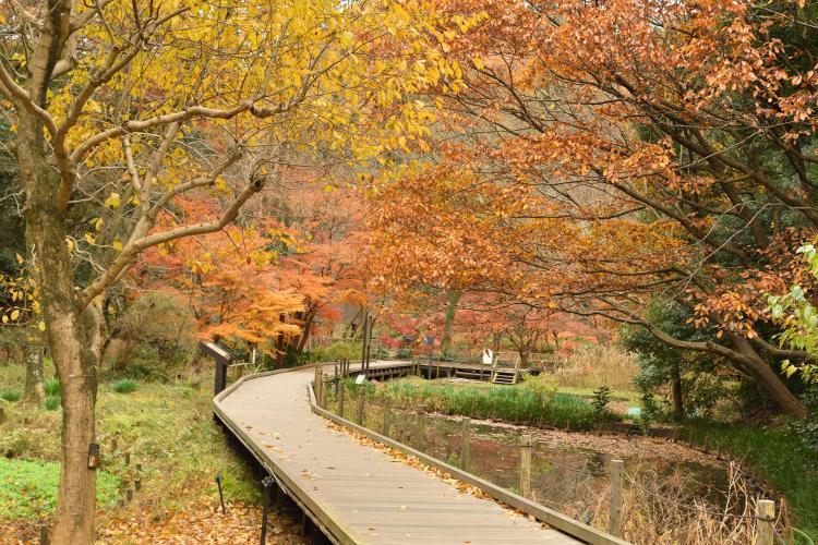 縣立東高根森林公園
