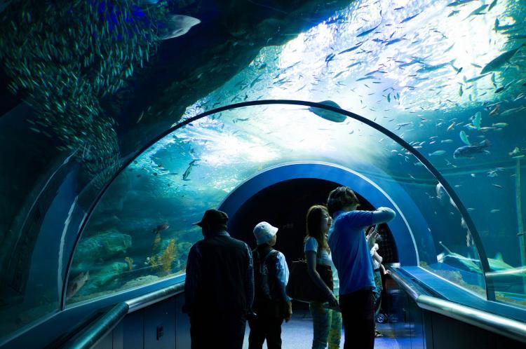 新潟市水族館瑪淋啤阿日本海