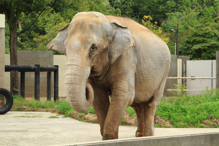 石川動物園