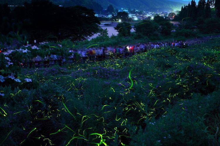 螢火蟲童謠公園