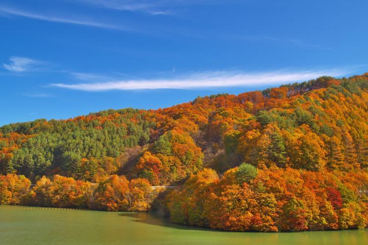 紅葉湖(箕輪水壩)