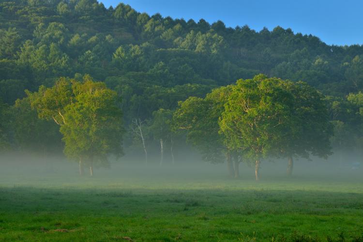 榧樹之平高原