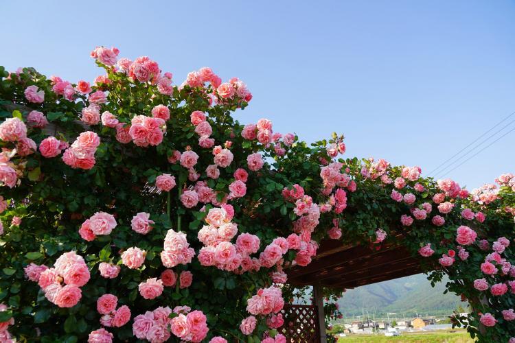 坂城千曲川玫瑰公園