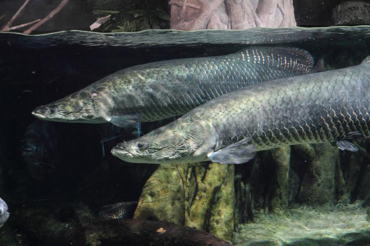 世界淡水魚園水族館Aquatoto Gifu