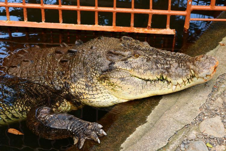 熱川香蕉鱷魚園