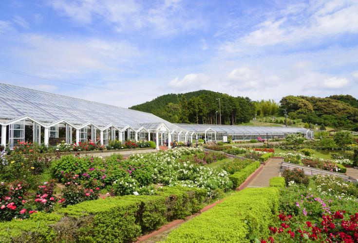島田市玫瑰之丘公園