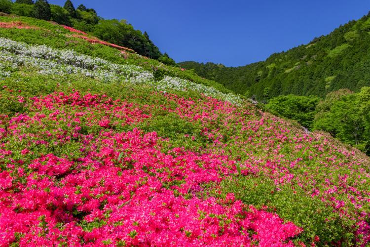 姫之澤公園