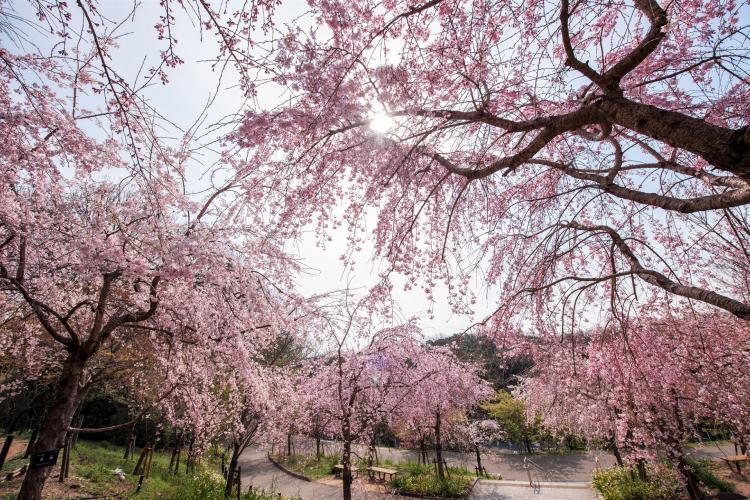 東山動植物園(東山公園・東山天空塔)