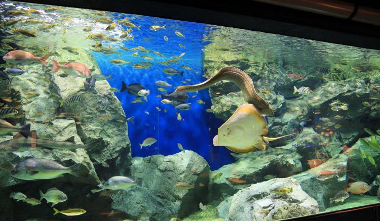 碧南海濱水族館