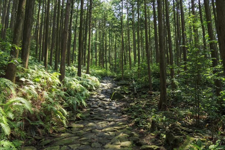 熊野古道(伊勢路)