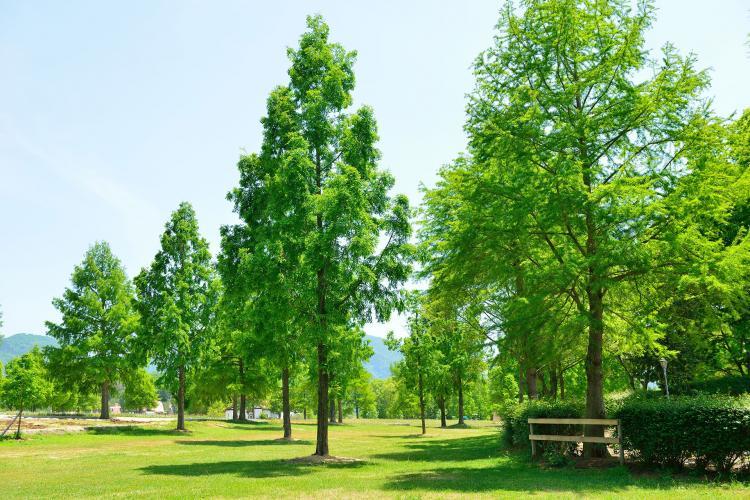 滋賀農業公園Blume之丘