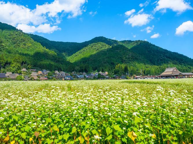 美山町(重要傳統建造物群保存地區)