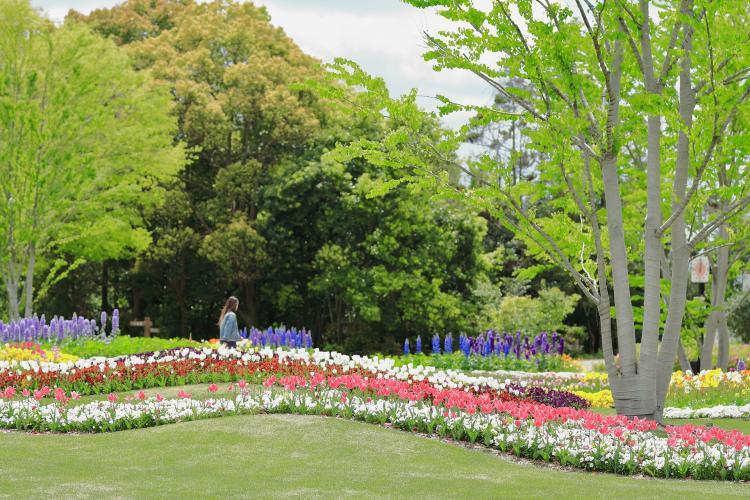 兵庫縣立花卉中心(加西花卉中心)