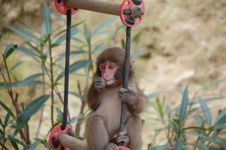 淡路島猴子中心