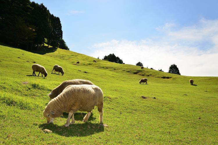牧場 六甲山