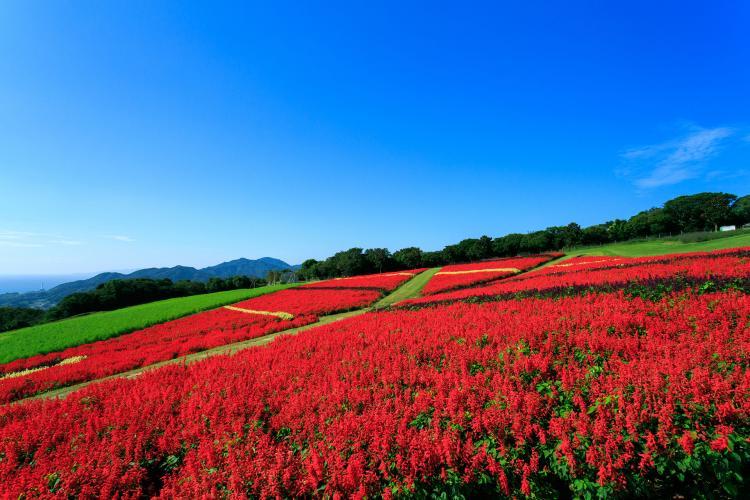 淡路花卉山丘