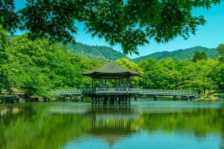 春日大社(奈良公園)